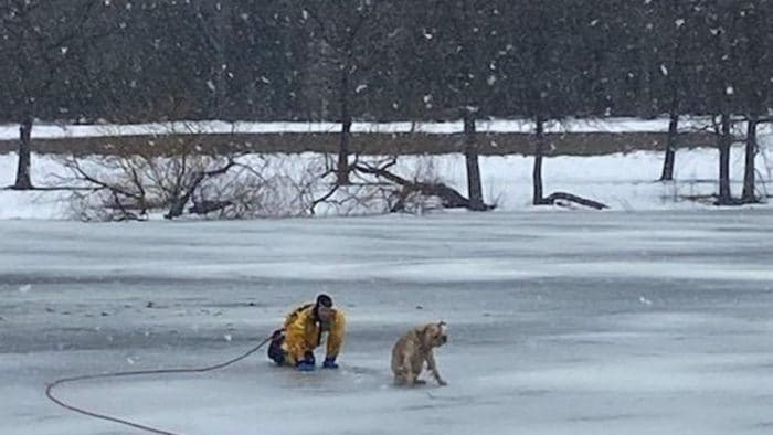"""Lucky"" the Dog rescued from freezing pond at Grant park"
